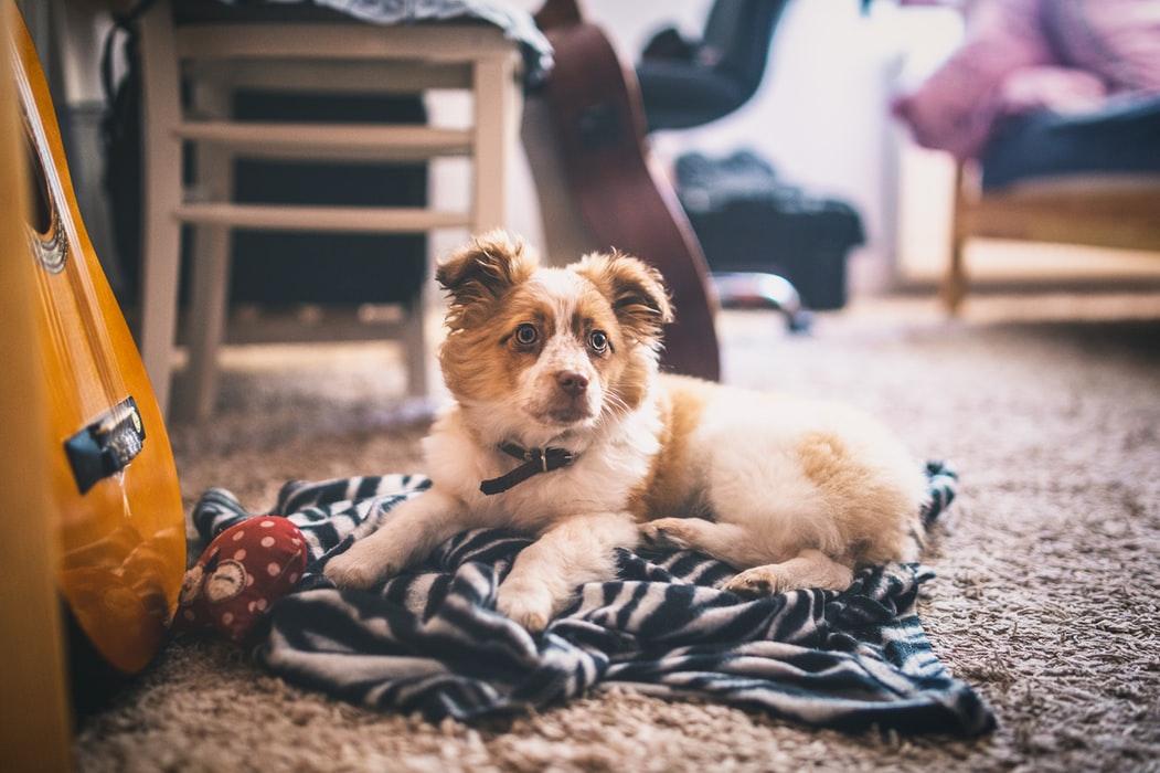 ペットの毛が洗濯物に付かない方法&洗濯機の故障